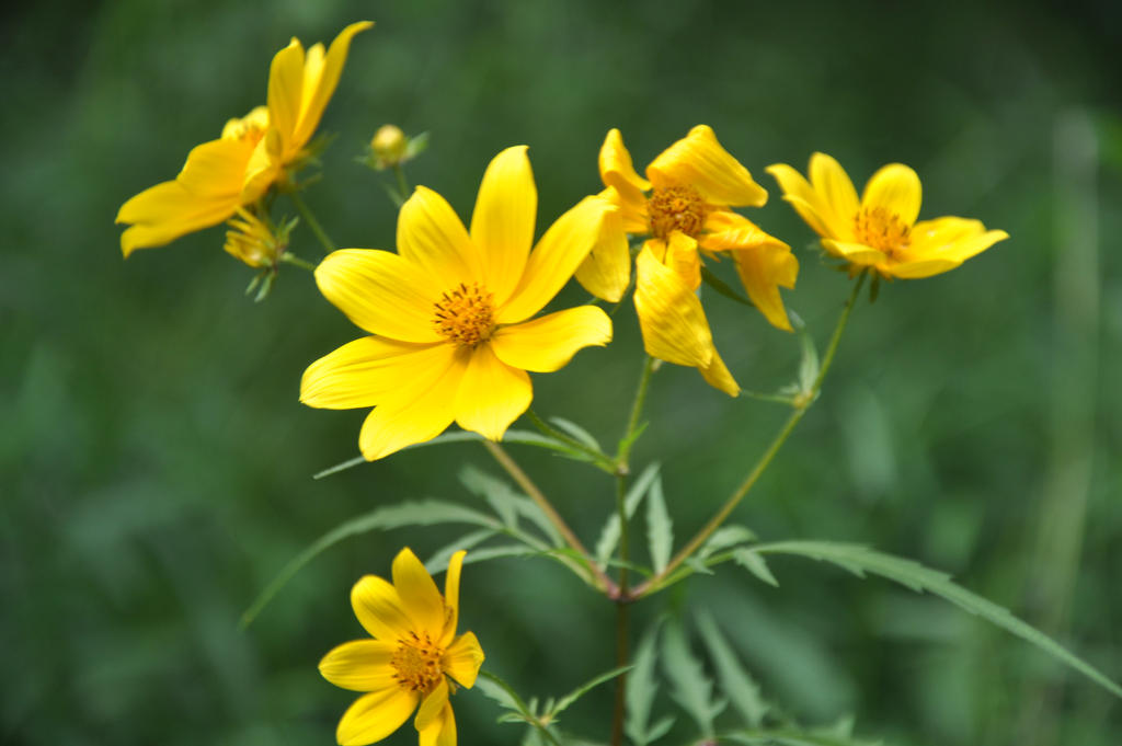 Yellow wild flower by coon4492 on deviantart yellow wild flower by coon4492 mightylinksfo