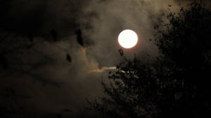Moon...Morning..10/30/2020