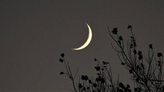 Evening Moon...11/17/2020