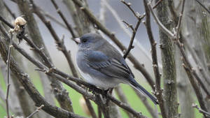Wee Bird (2)