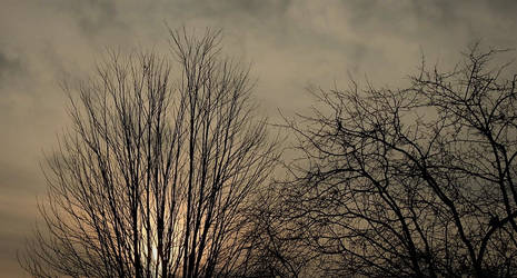 Trees in Sunset...2/22/2021