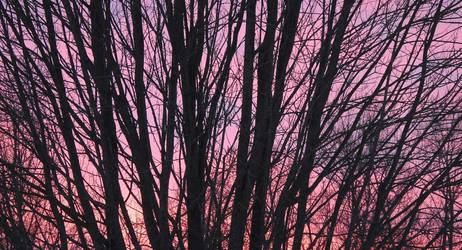 Sunset Trees...2/22/2021