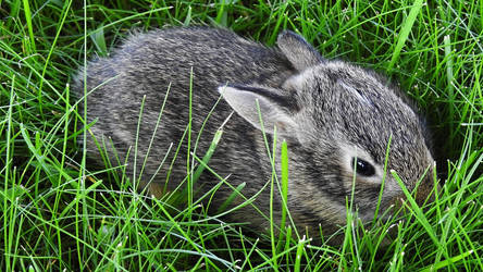 Baby Bunny (2) by A-Separate-Reality