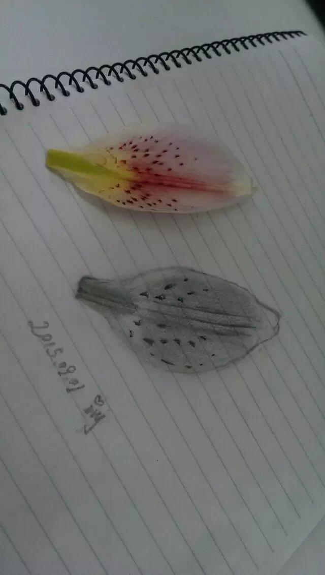 petal by ivy520ee