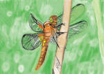 Digital painting Dragonfly by Danieljamieson
