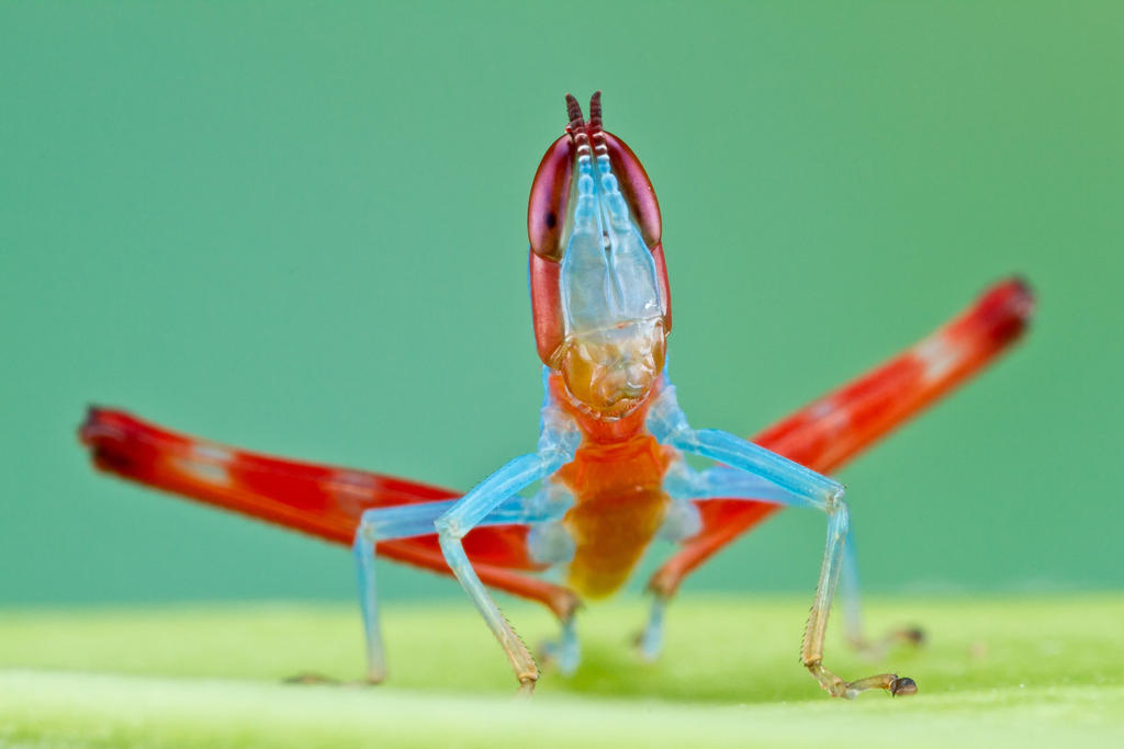 Grasshopper 74 by ColinHuttonPhoto