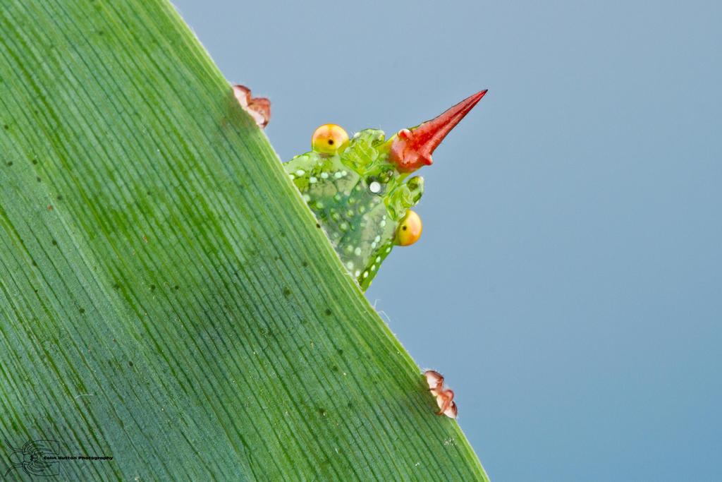 Peek-a-boo by ColinHuttonPhoto