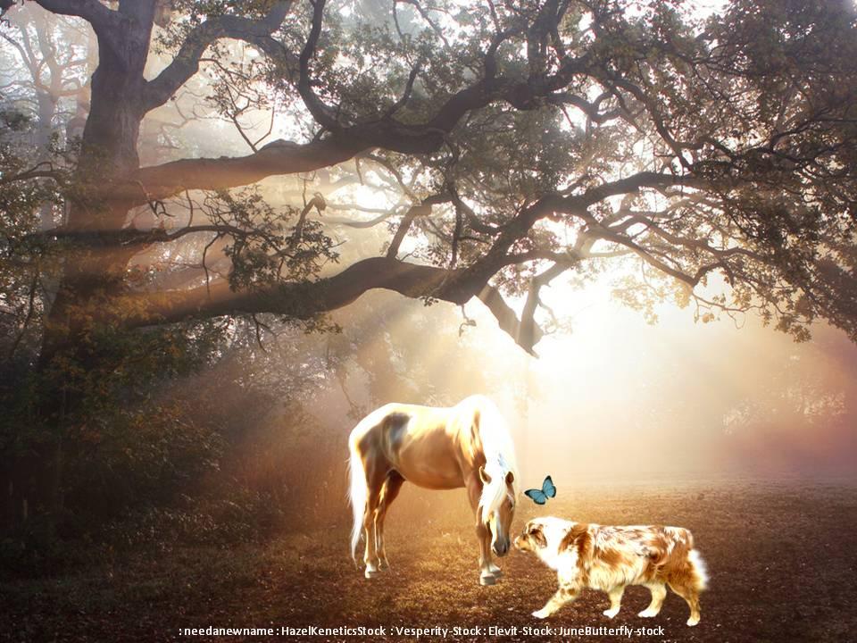 The Light Of Friendship by Roseflyre