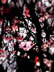 spring by HopingMorals