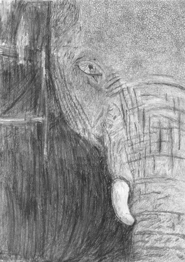 Elephant - completed