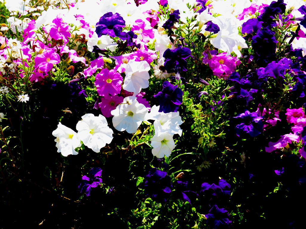 The beautiful flowers of colors by hopefoundmycameras on deviantart the beautiful flowers of colors by hopefoundmycameras izmirmasajfo