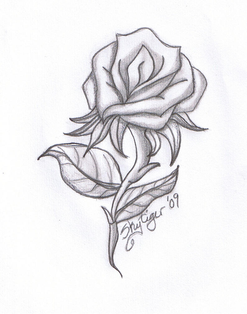 Rose Pencil Drawing By Skytiger