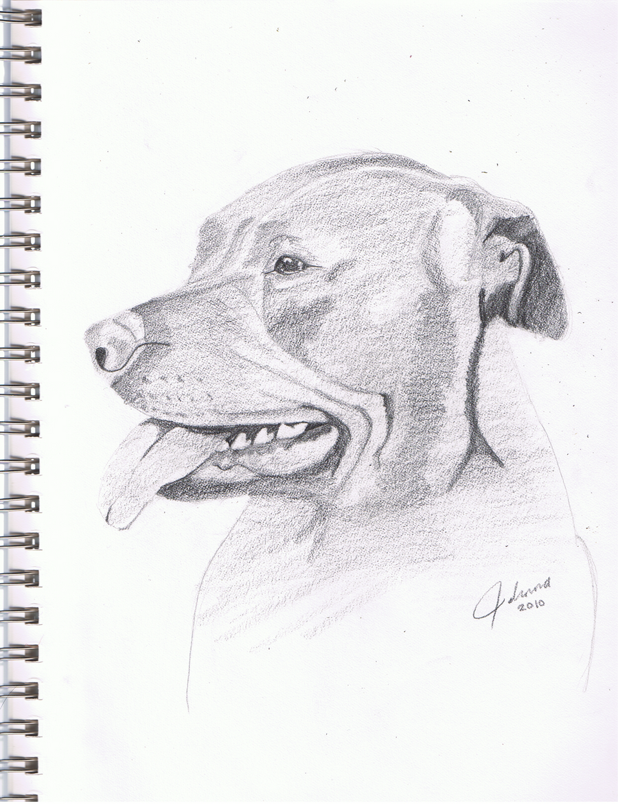Pitbull dog drawings in pencil - photo#26