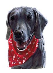 Bandanna Pup