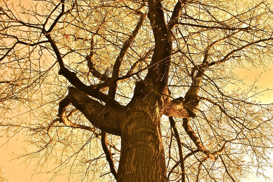 Tree by LX-SA-97