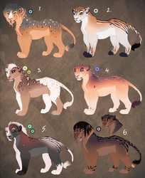 Lioness adopts. OPEN: 1 left!
