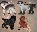 Cub adopt, Granthrow and other! Auction CLOSED: