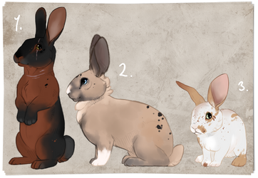 Bunny Adopts. auction. CLOSED: by BeeStarART