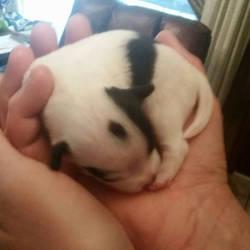 So tiny in daddy's hands by Vampirefreak911
