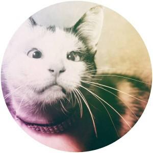 SlimyRat's Profile Picture
