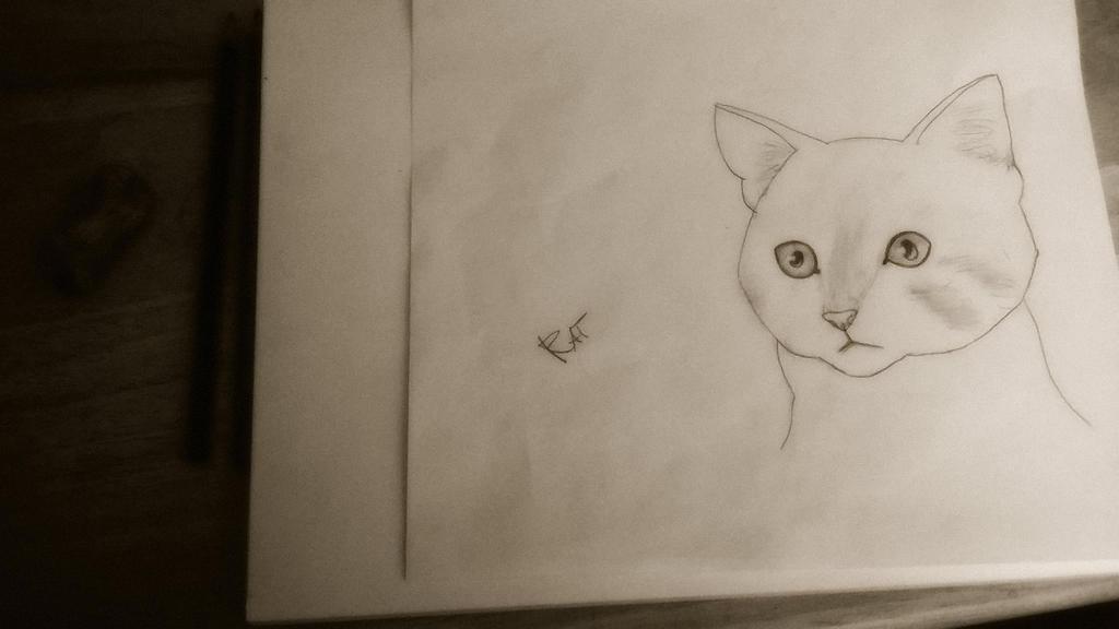Semi Realistic Cat Drawing by SlimyRat