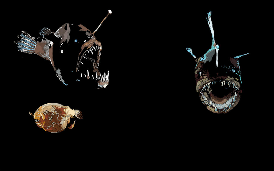 angler fish The anglerfish is a fish of the teleost order lophiiformes (/ ˌ l ɒ f i ɪ ˈ f ɔːr m iː z /) it is a bony fish named for its characteristic mode of predation , in which a fleshy growth from the fish's head (the esca or illicium) acts as a lure .