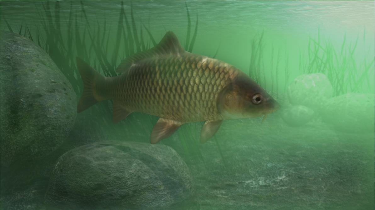 carp Faced with such public pressure to make carp more widely available and the worrisome decline of native fish stocks after a century of intense exploitation, the us commission of fish and fisheries began an intensive effort of carp cultivation in 1877.