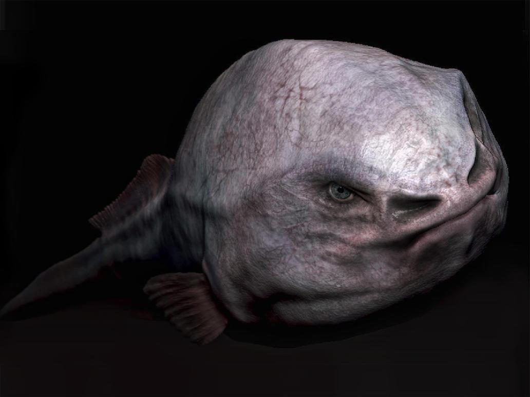 blob fish in natural habitat