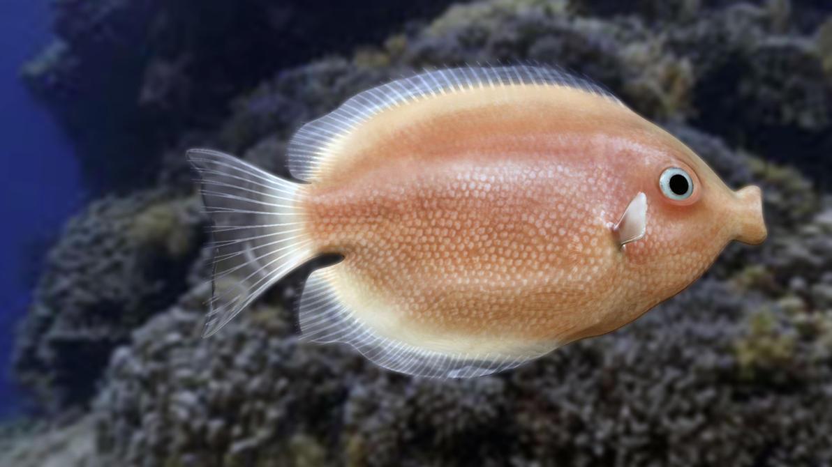 Kissing gourami by vukaddin on deviantart for Kissing gourami fish