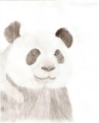 Panda by NicoRobin96
