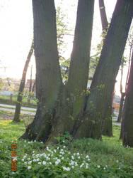 tree by NicoRobin96