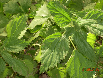 plants 13 by NicoRobin96