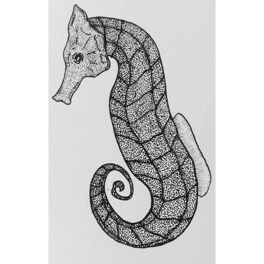 The Sea Horse by Orfieu