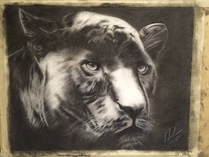 Panther charcoal