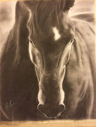Horse front view charcoal