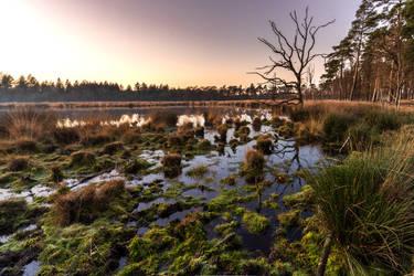 Hondsrug - Drenthe - The Netherlands