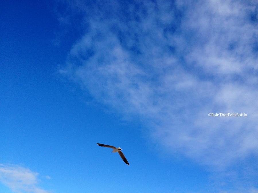 Glider by RainThatFallsSoftly