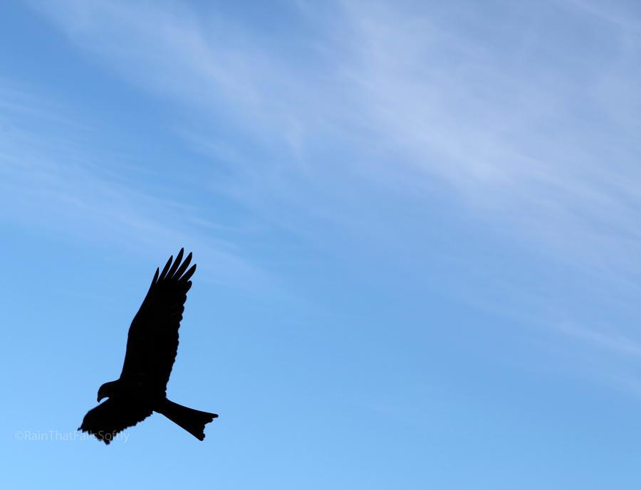 Predator of the Skies by RainThatFallsSoftly