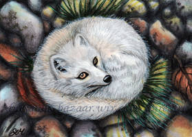 Arctic Fox ACEO by De-Vagrant