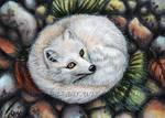 Arctic Fox ACEO