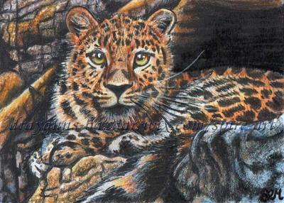 Camouflage ACEO by De-Vagrant
