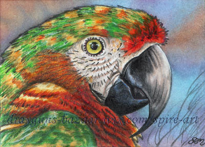 Macaw ACEO by De-Vagrant