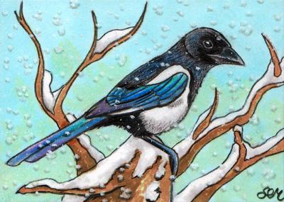 Winter Magpie ACEO by De-Vagrant