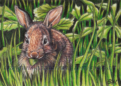 Morning Silflay ACEO by De-Vagrant