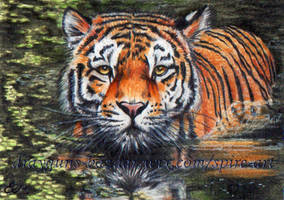 Wading ACEO by De-Vagrant