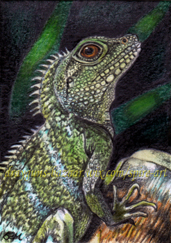 Chinese Water Dragon ACEO DBSA WM by De-Vagrant