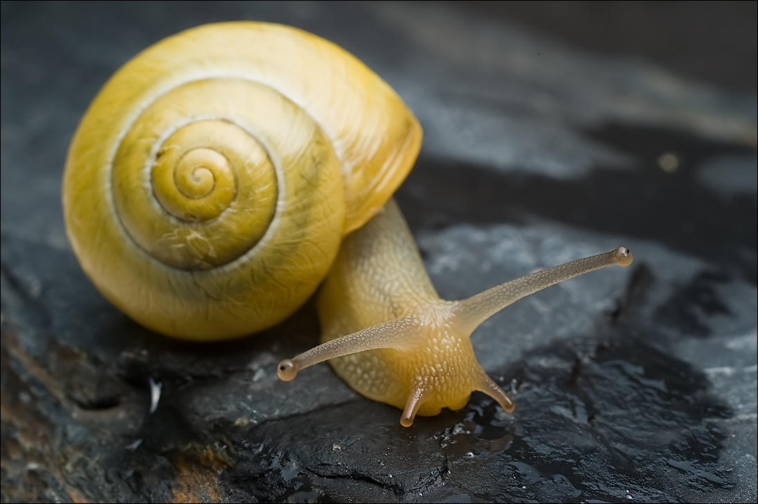 SUPER ANIMAL: Snail