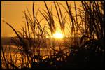 Sunset 2 Corn