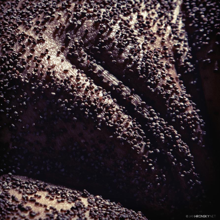 Sticky Seeds by zlty-dodo