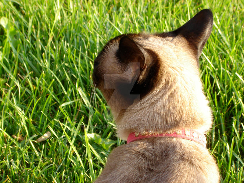 Tabitha and the Grass by Lanisatu